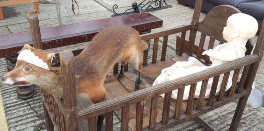 A tiara on a fox?